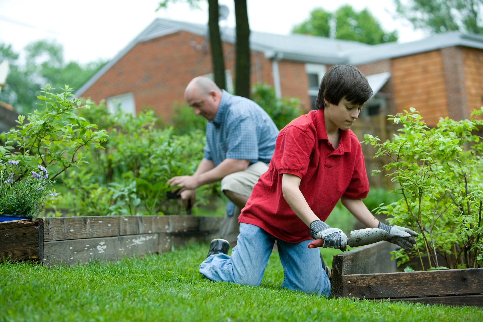 son and father gardening